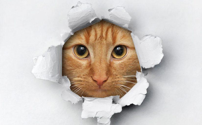 Cómo tapar un agujero en la pared de tu hogar